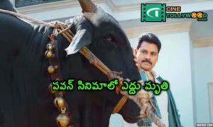 pawan kalyan movie bull was died